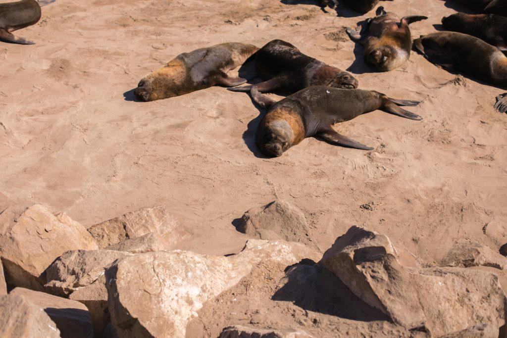 Reserva de lobos marinos / Mar del Plata